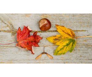 Brincadeiras de Outono para Principezinh@s 3